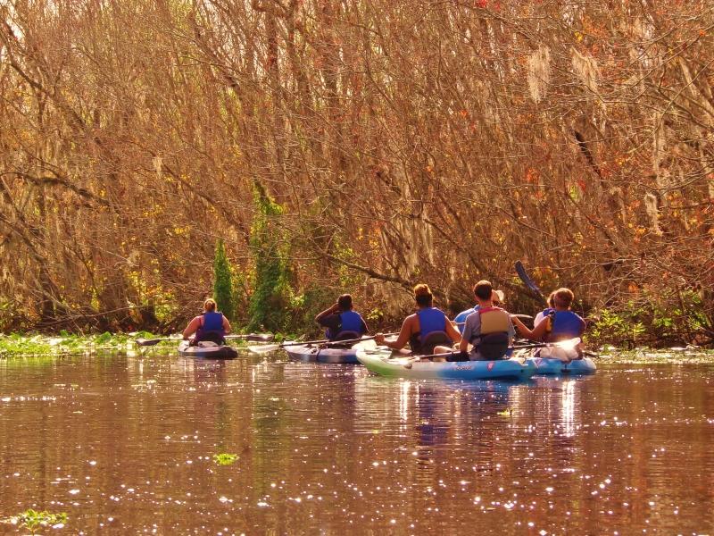 Manatee Kayaking Tours!