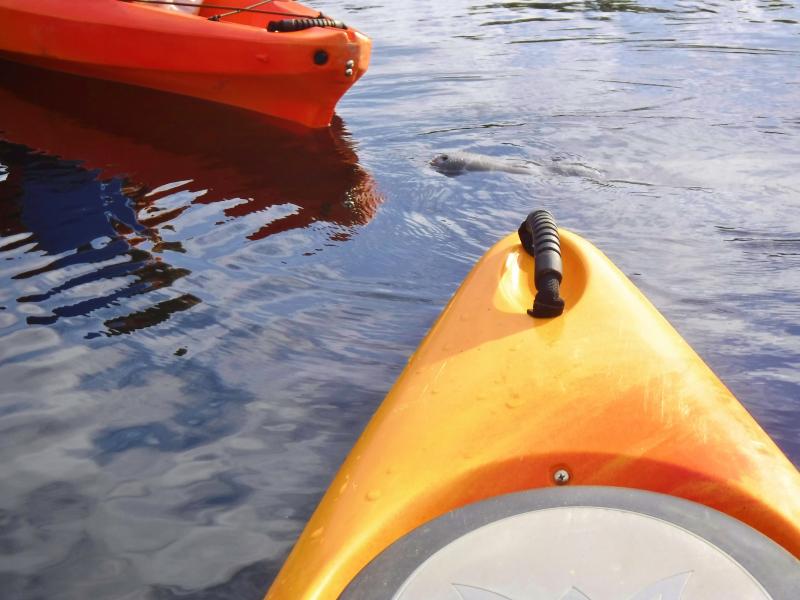 manatee kayak tours blue springs (13)