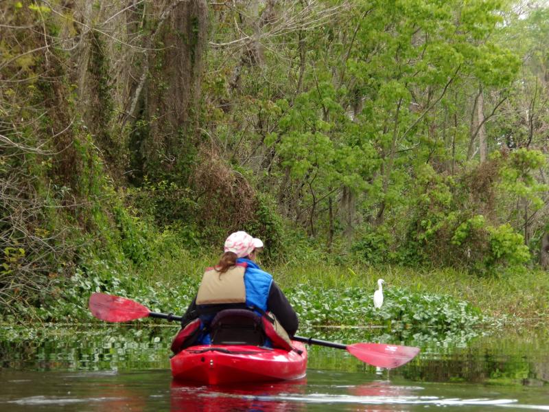 Kayak Tours Blue Springs