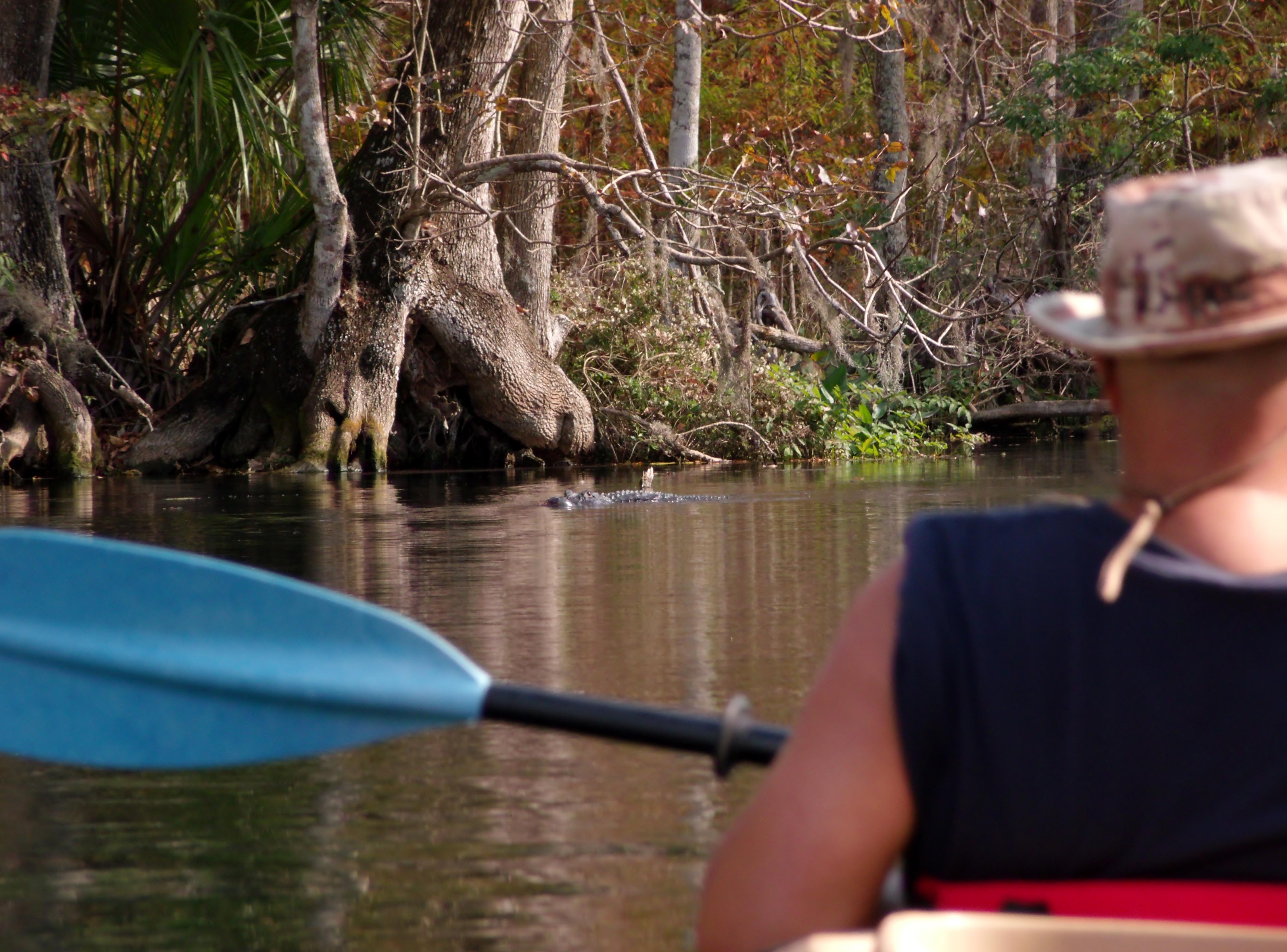 Florida Kayak Tours