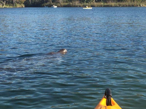 kayak manatee tours Orlando