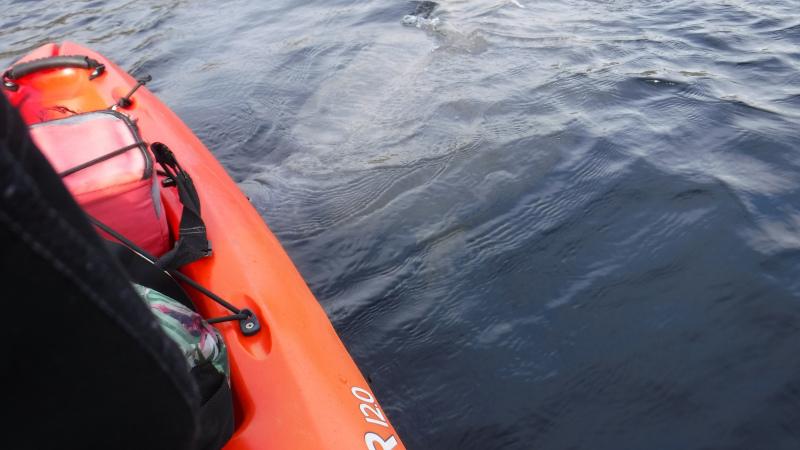 Kayak-manatee-kayak-tours-blue-springs-15