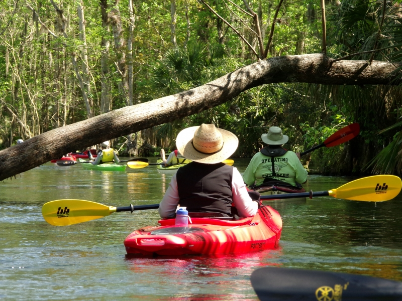 Kayaking Silver Springs