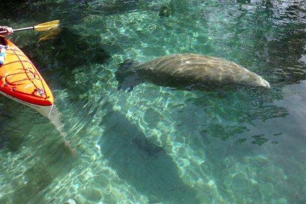 Kayaking Orlando