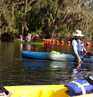 Manatee Kayak Tours!