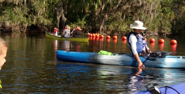 Manatee Kayaking Tours! Blue Spruings State Park
