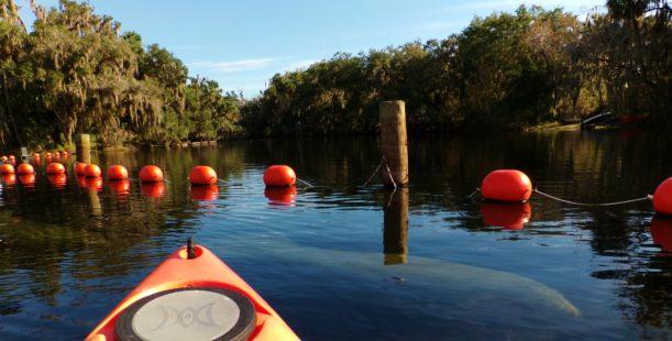 kayaking Tours Blue Springs