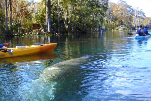 Orlando Kayaking Tours