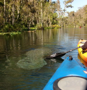 Florida Kayak Tours