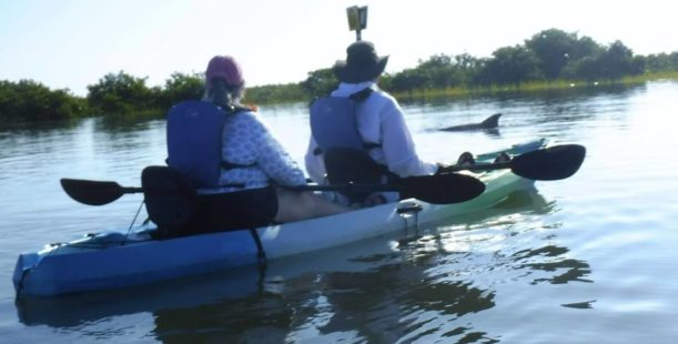 Kayak Tours in St Augustine with dolphins